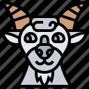 goat, ruminant, herbivore, farm, livestock