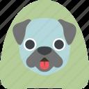 buldog, cute, dog, pet icon