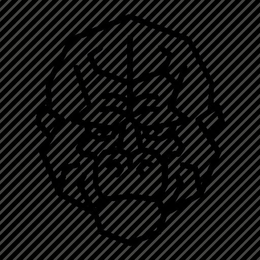 animal, ape, face, gorilla, head, monkey, orangutan icon