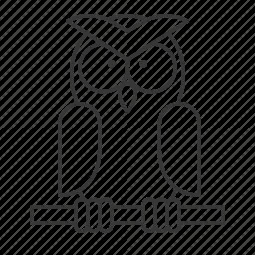 animal, bird, owl, wildlife, zoo icon