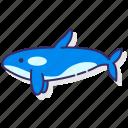 killer, whale, orca