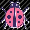 ladybug, bug, insect, dots