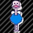 ostrich, bird