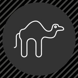 animal, camel, desert traveller, domestic, egypt, egyptian, mammal icon