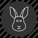 bunny, coney, cony, hare, lapin, rabbit, cute animal