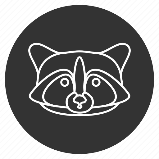 animal, coon, face, nature, raccoon, racoon, wildlife icon