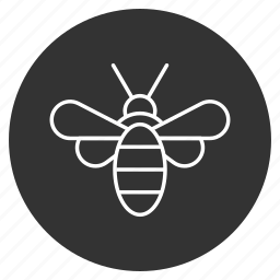 bee, bug, fly, honey worker, insect, natural drone, sweet hunter icon