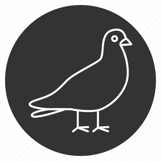 beauty, bird, dove, freedom, peace, pigeon, wings icon