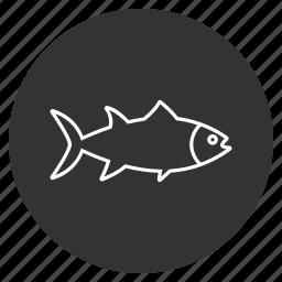 crucian, diet, fish, fishing, roach, sea food, seafood icon