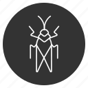 beetle, bug, grasshopper, insect, locust, parasite, pest icon