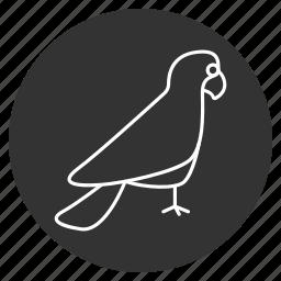 beak, bird, macaw, nature, parrot, poll-parrot, popinjay icon