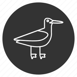 bird, heron, nature, sandpiper, sea gull, sea mew, seagull icon