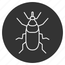 animal, beetle, bug, fly, insect, nature, weevil icon