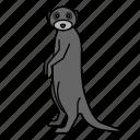 animal, mammal, meerkat, wild, wildlife