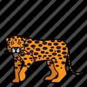 animal, leopard, mammal, wild, wildlife icon