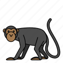 animal, mammal, monkey, wild, wildlife
