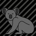 animal, koala, mammal, wild, wildlife