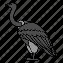 animal, bird, vulture, wild, wildlife