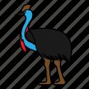 animal, bird, cassowary, wild, wildlife