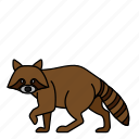 animal, mammal, raccoon, wild, wildlife