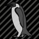 animal, wild, penguin, wildlife, bird