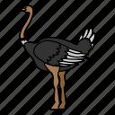 animal, bird, ostrich, wild, wildlife