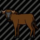 animal, mammal, wild, wildebeest, wildlife