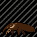 animal, anteater, mammal, wild, wildlife icon