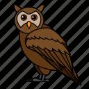animal, bird, owl, wild, wildlife
