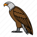 animal, bird, eagle, wild, wildlife icon