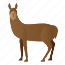 animal, llama, mammal, wild, wildlife icon