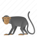 animal, mammal, monkey, wild, wildlife icon
