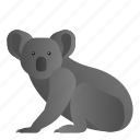 animal, koala, mammal, wild, wildlife icon