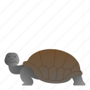 animal, reptile, turtle, wild, wildlife icon