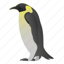 animal, penguin, wild, wildlife icon