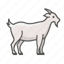 farm, goat, animal