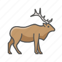 animal, elk, wild icon