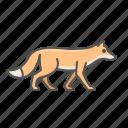 animal, fox, wild