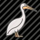 animal, pelican, wild icon
