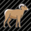 animal, bighorn, wild, ram icon