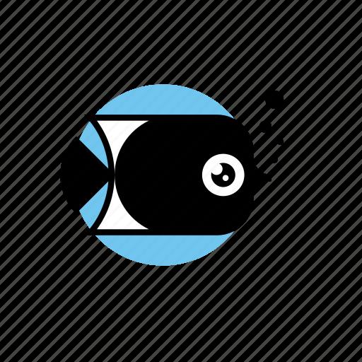 Animal, fish, food, ocean, sea icon - Download on Iconfinder
