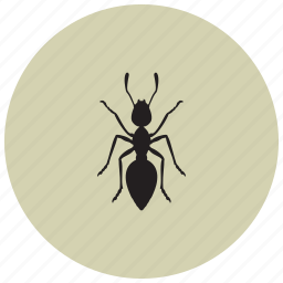 animals, ant, collectors, vermin, workers icon