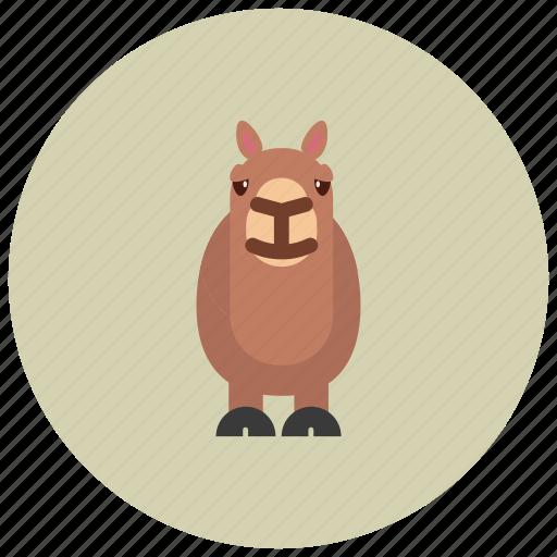 animals, camel, desert, hoofs, ride icon