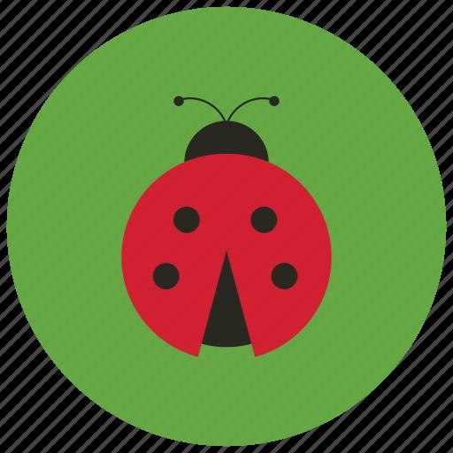 animals, bug, dots, ladybug, spring icon
