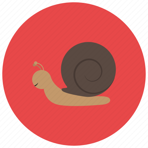 animals, garden, shell, slow, snail icon