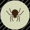 animals, black widow, bug, deadly, spider