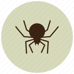 animals, black widow, bug, deadly, spider icon