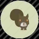 animals, park, squirrel, tail, tree icon