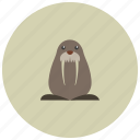animals, arctic, cute, flippers, walrus icon