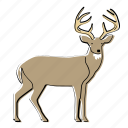 buck, animal, deer, mammal, reindeer, wildlife, woods